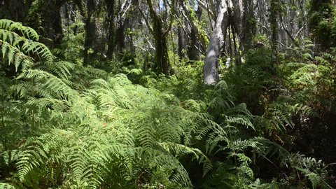 Thick lush green jungle trees, ferns and vines sway gently in the breeze