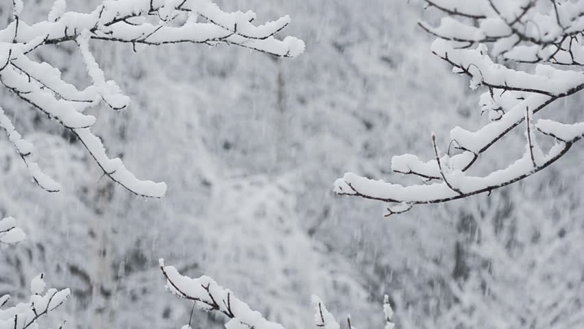 Heavy snow falling in a forest in winter time