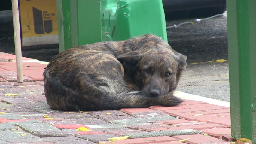 Stray and wet dog on the street trying to sleep.