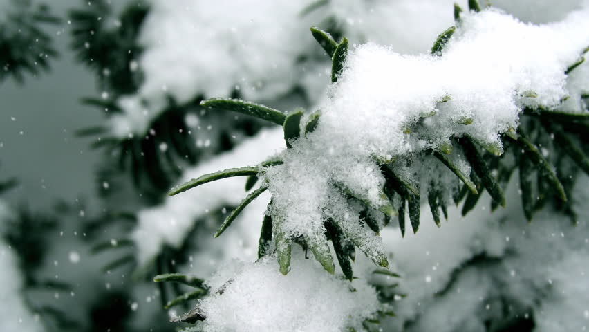 Detail of trees in winter and falling snow particles created using real snow flakes, blown by wind and using accurate depth of field animated in After Effects.  Looping clip.