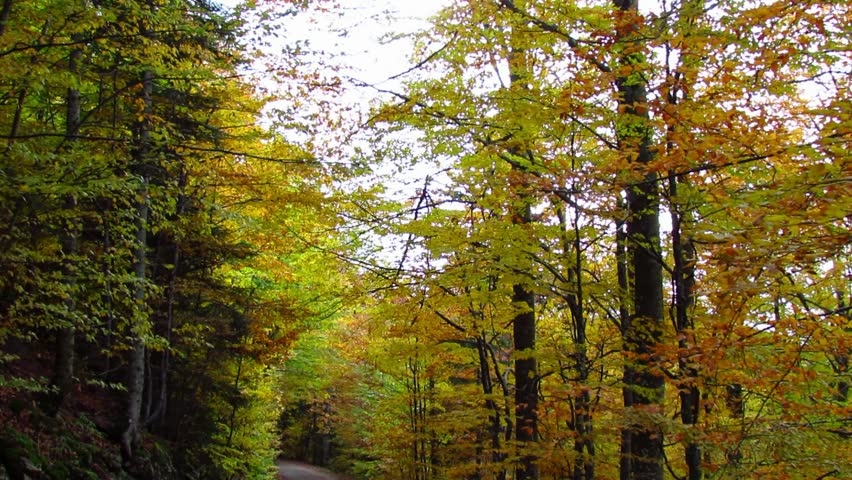 Road from beech forest - from dark to vivid colors - tilt down