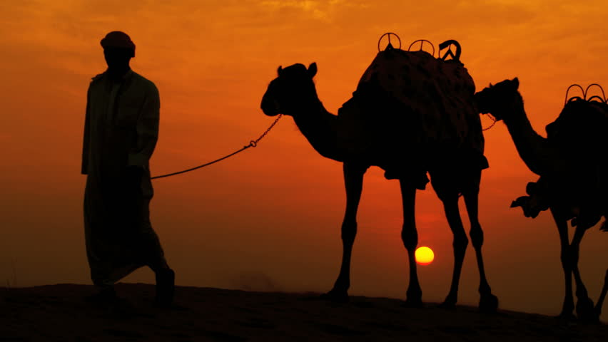Middle eastern male leading his camels through desert sunset silhouette shot on RED EPIC, 4K, UHD, Ultra HD resolution   Shutterstock HD Video #5314406