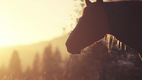 Horse Close-Up at sunset, 240fps
