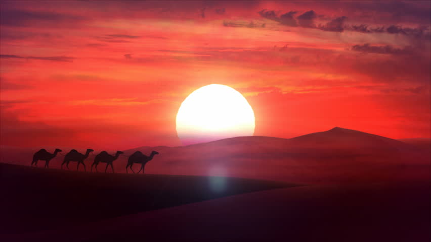 A camel train travels across a desert in the sunset. Sand dunes silhouette and cloudy cloud sunset in the background. Animation HD #5337989