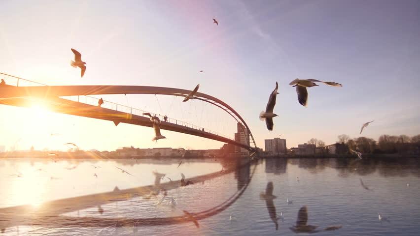 Beautiful sunset sun flare water mirror reflection. swan seagull birds. bridge. slow motion. lake river pond | Shutterstock HD Video #5354819