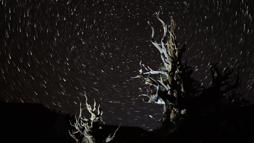 4K Astro Time Lapse of Star Trails over Ancient Bristlecone Pine Tree at Sunrise -Tilt Up-