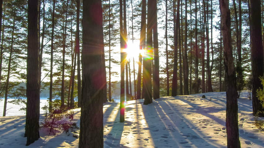 winter forest and sun, 4K timelapse