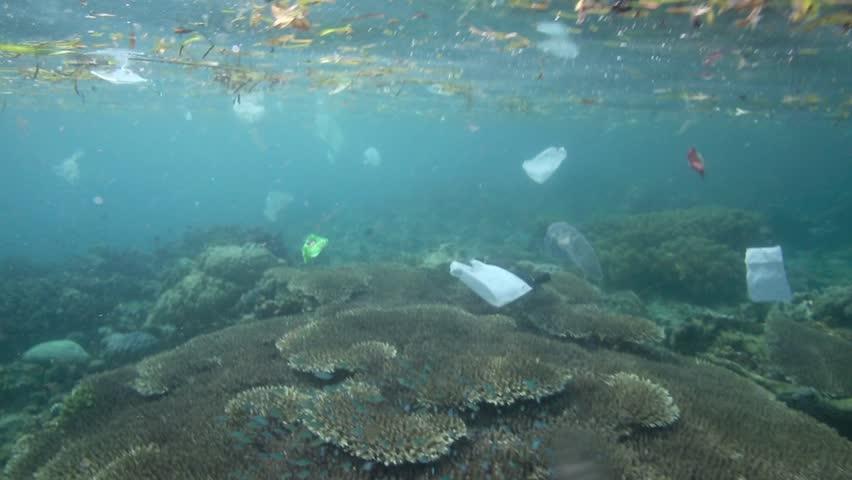 Plastic garbage and other debris floating underwater over fragile coral reef in Bunaken Island, Sulawesi #5402330
