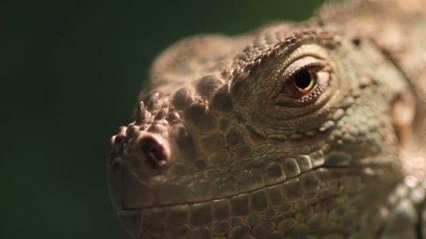 Lizard terrarium