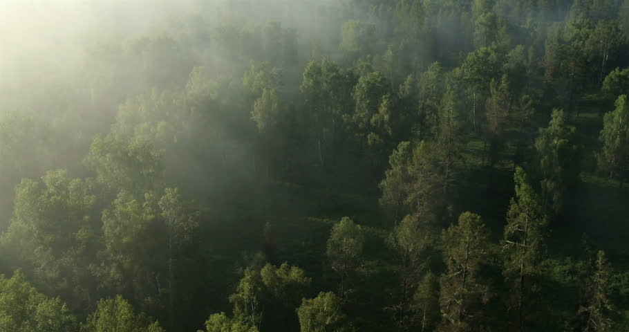 Flight over the Mountains. Altai. Siberia. Flying over the River. Forest Valley. Morning Fog | Shutterstock HD Video #5491406