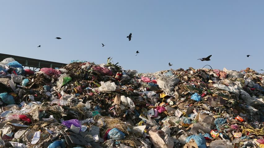 Pollution, dumping of garbage in city. Seagulls and vultures on landfill. | Shutterstock HD Video #5494796