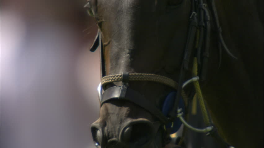 Slow motion shot of a horse's head & face during a Polo match | Shutterstock HD Video #5507780