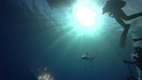 Blue shark in backlight, aginst the sun
