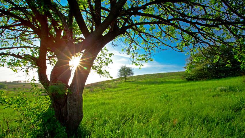 summer landscape. 4K. FULL HD, 4096x2304. #5559152