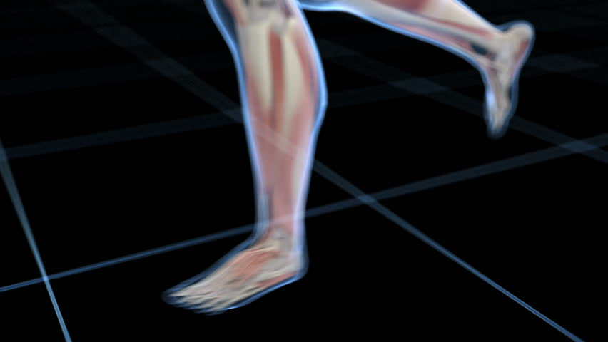 x-ray style - medical 3d animation of a male jogger - visible muscle system