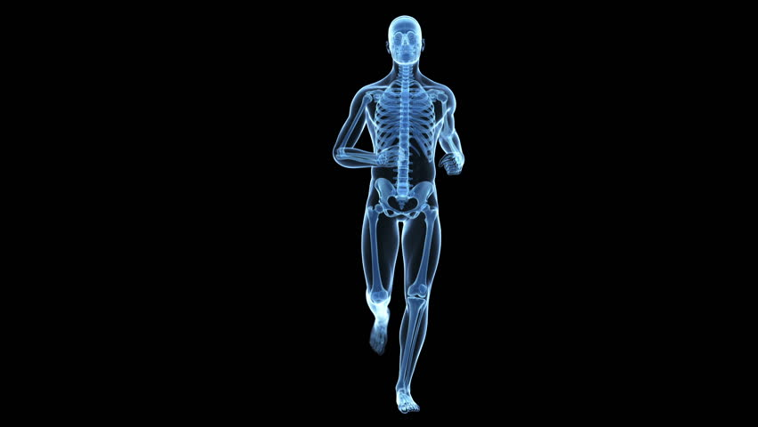 x-ray style - medical 3d animation of a running male