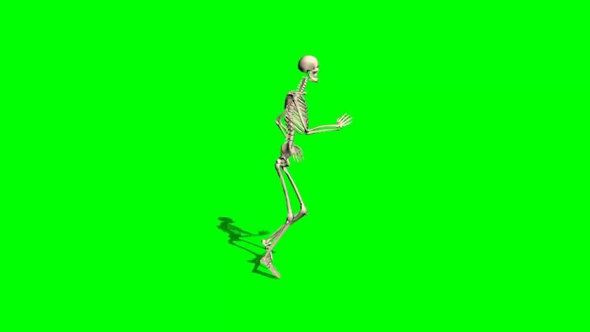 skeleton - various poses - green screen