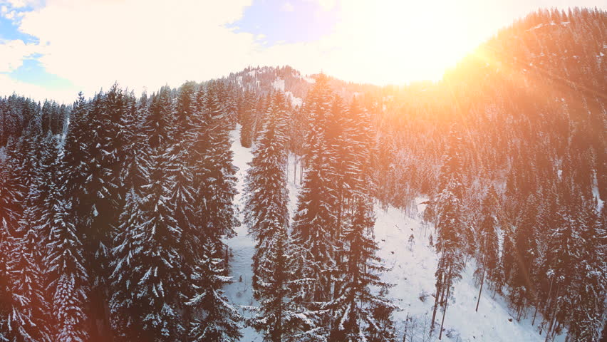 Snow winter trees. woods forest landscape. beautiful nature. aerial view. sunset dusk
