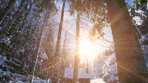 snow falling. winter wonderland. snowing snowy. sunset dusk sunshine. forest trees woods nature. slow motion. winter background. romantic wonderland. beautiful environment