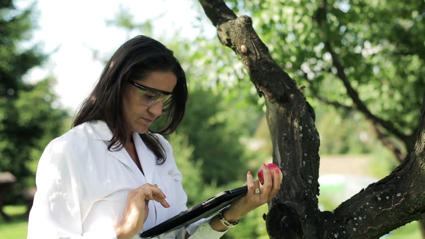 scientist checking the apple and working with the tablet
