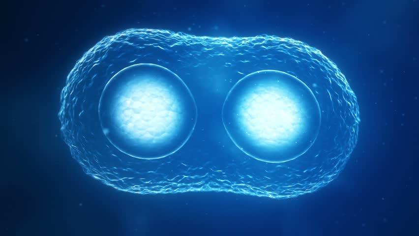 Cells Dividing   Shutterstock HD Video #5628560