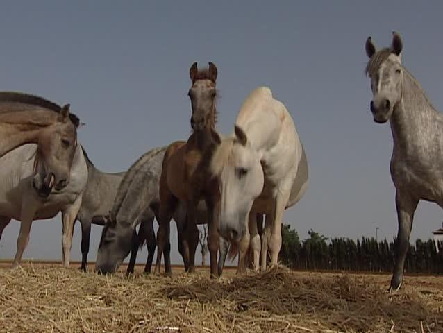 Horses eating hay | Shutterstock HD Video #5683556