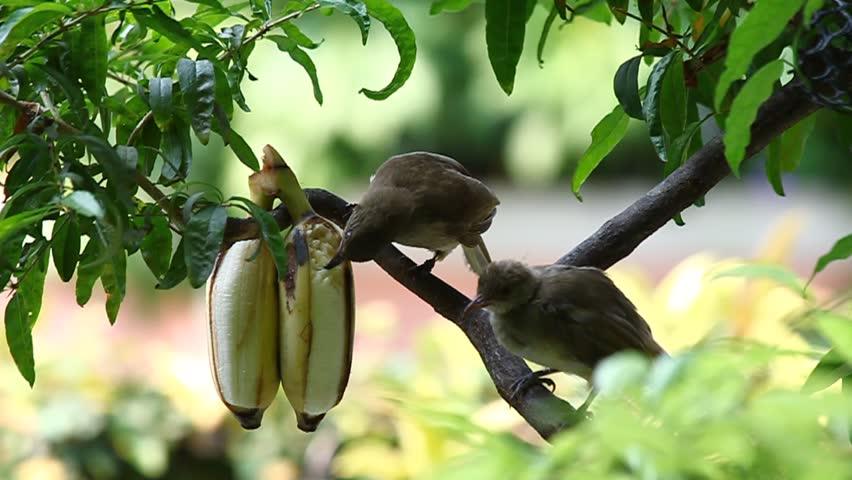 Bird feeding baby  #5748512