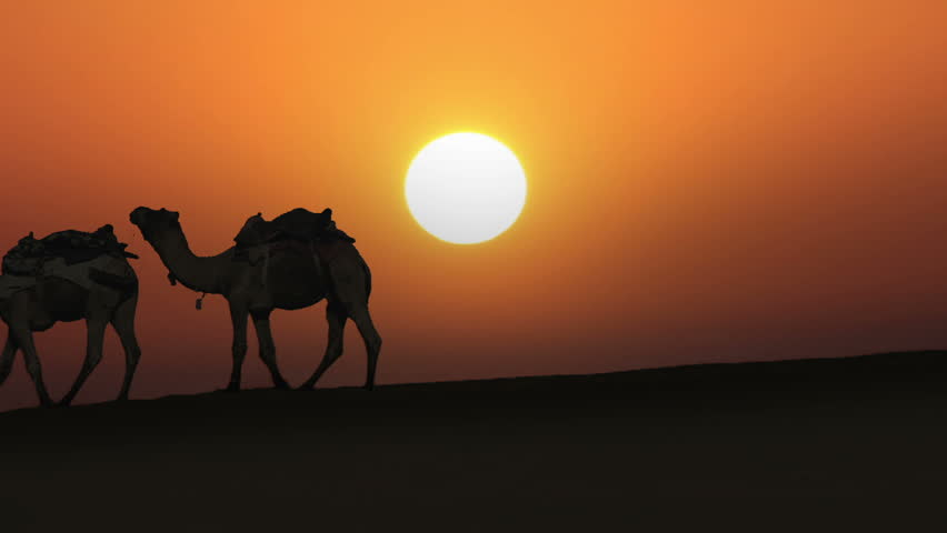 cameleers leading caravan of camels in desert - silhouette against sunset