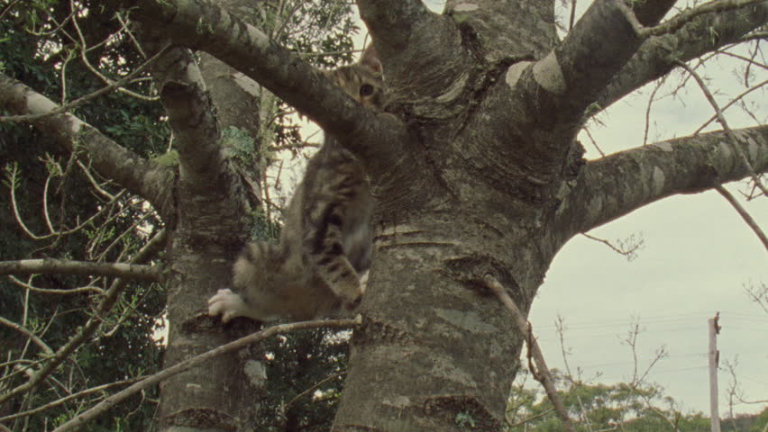 Feral Cat kitten in a tree | Shutterstock HD Video #5846819