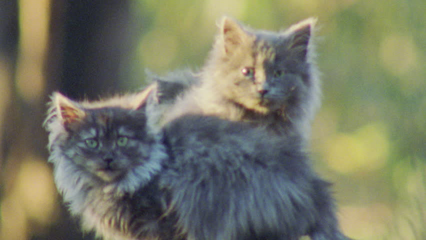 Feral Cat kittens in a forest | Shutterstock HD Video #5846879