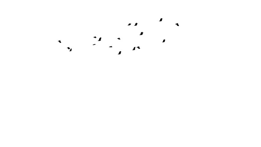 A flock of 17 pigeons flies across screen in the distance. Easily keyed/silo'd onto other footage or stills.