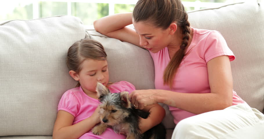 Cute little girl with mother playing with yorkshire terrier puppy at home in the living room | Shutterstock HD Video #5935961