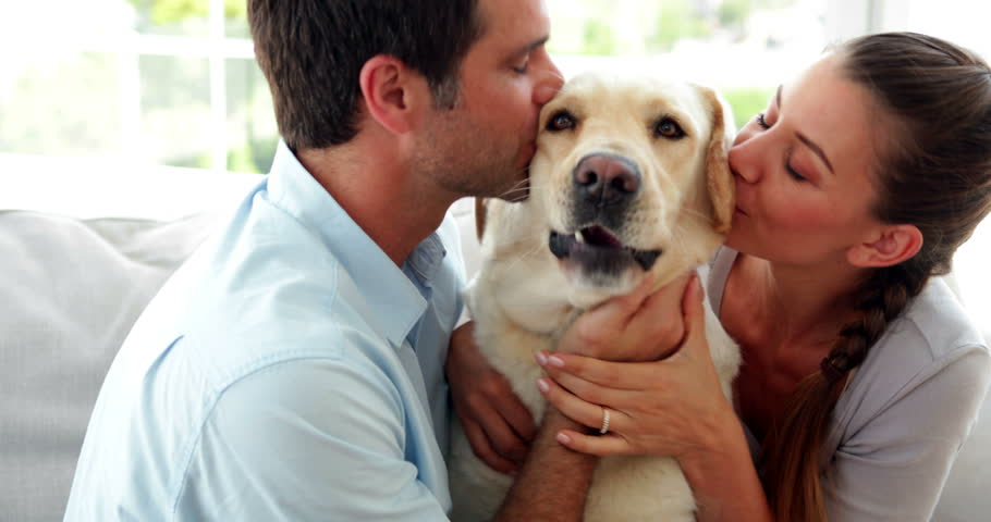 Laughing couple petting their labrador dog on the couch at home in the living room | Shutterstock HD Video #5936102