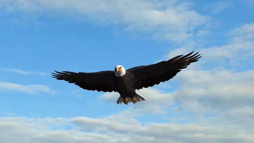 Bald Eagle flys in the sky | Shutterstock HD Video #5938583