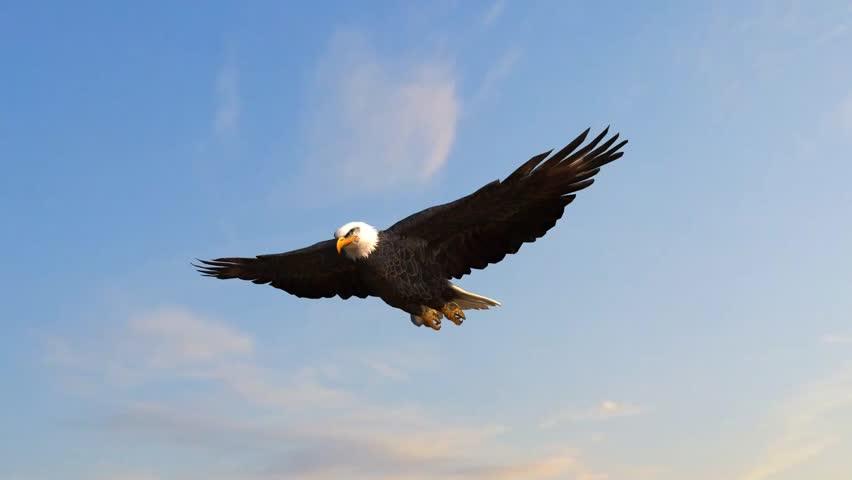 Bald Eagle flys in the sky | Shutterstock HD Video #5938592