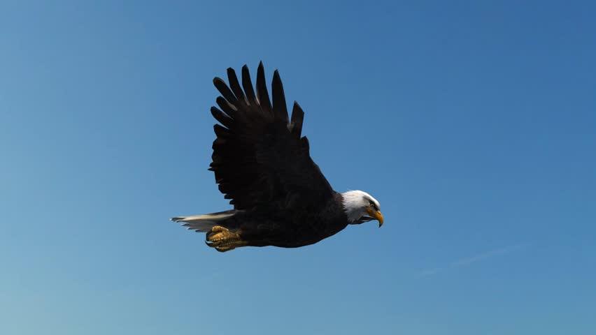 Bald Eagle Flight Close-Up tracking shot | Shutterstock HD Video #5993225