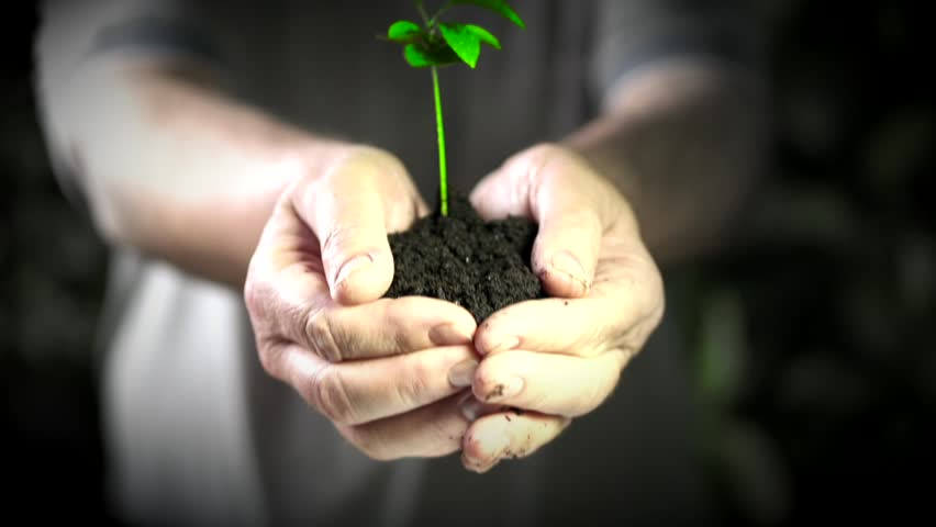 Small green tree in male hands. Concept and symbol of growth, care, protecting the Earth, ecology and green environment.