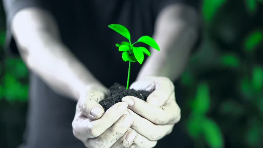 Green plant in female hands. Concept and symbol of growth, care, protecting the Earth, ecology and green environment.
