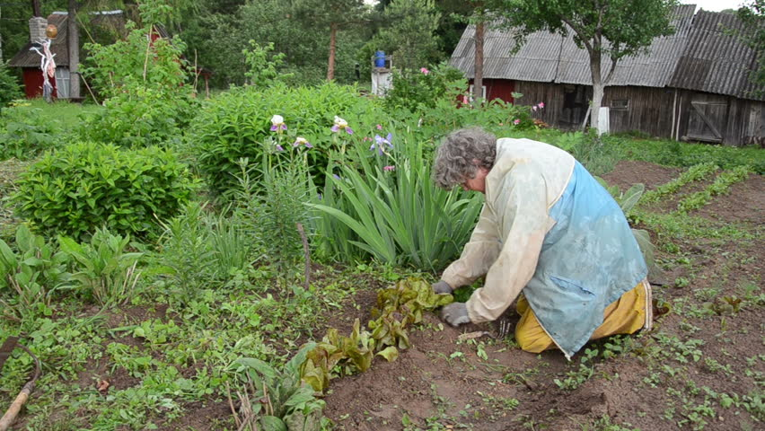 Old woman with workwear rain carefully grub weeds of beds | Shutterstock HD Video #6006305
