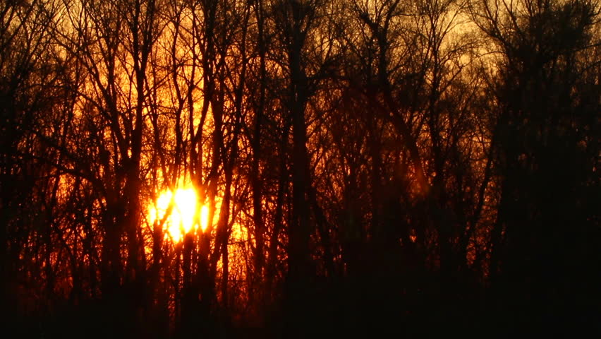 Beautiful sun at sunrise and tree branches. Time lapse  | Shutterstock HD Video #6028334