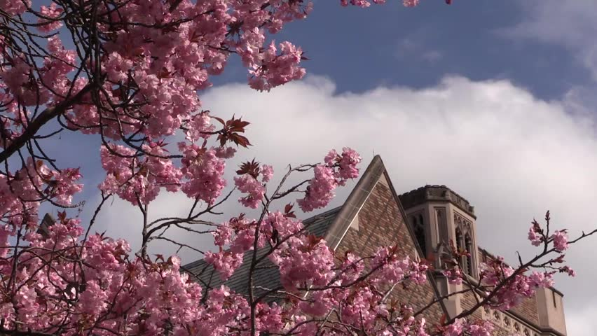 Spring at University of Washington | Shutterstock HD Video #6038057