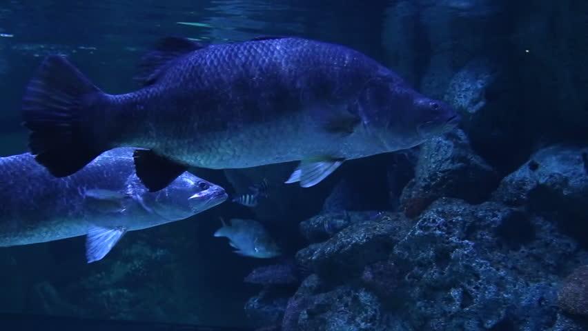 marine fishes #6048671