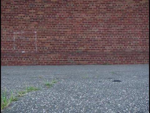 Bouncing Tennis Ball against Wall