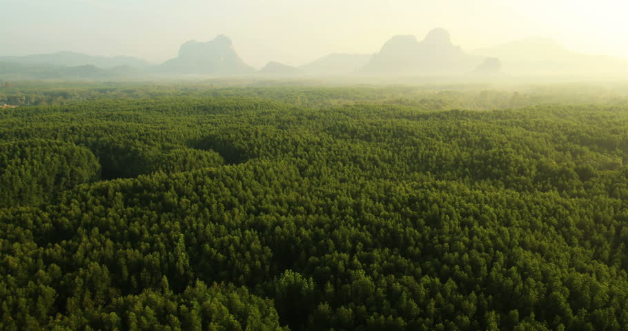 Aerial View: Mangrove forest in Krabi province, Thailand, February 2014. Krabi is a town on the west coast of southern Thailand at the mouth of the Krabi River where it empties in Phangnga Bay.