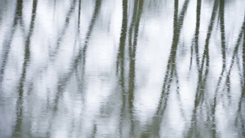 Water with tree reflection in rain.