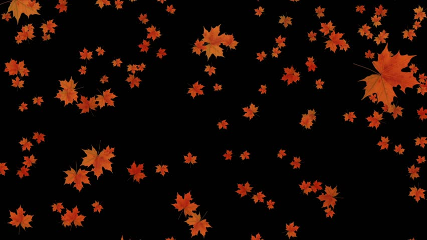 Maple fall background,autumn composition space.garden ornamental leaves,canadian maple leaf. cg_01242