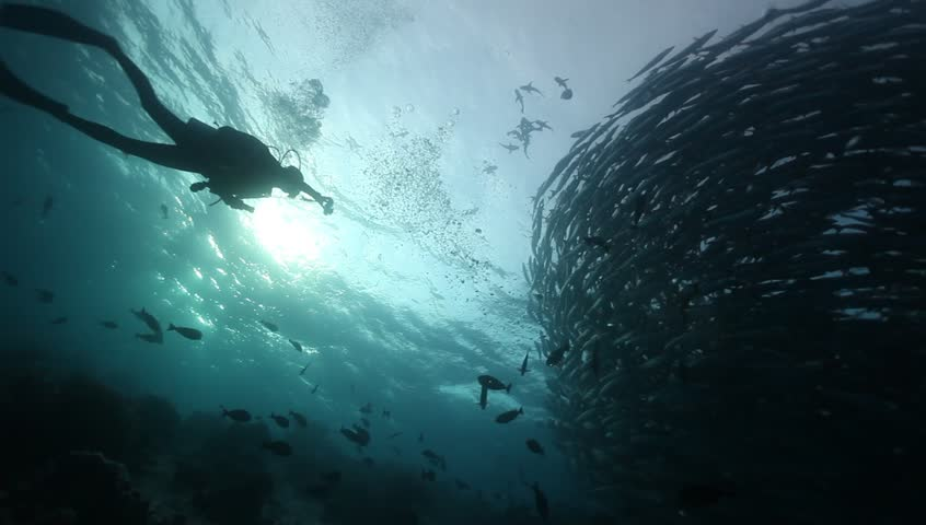 WS school of barracuda vortex silhouette with diver taking photo