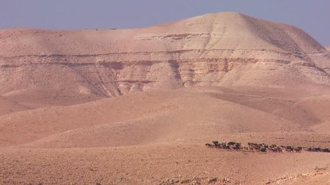 JORDAN CIRCA 2013 - Sheep and goats are led in the distance by a Bedouin shepherd in Israel or Jordan.