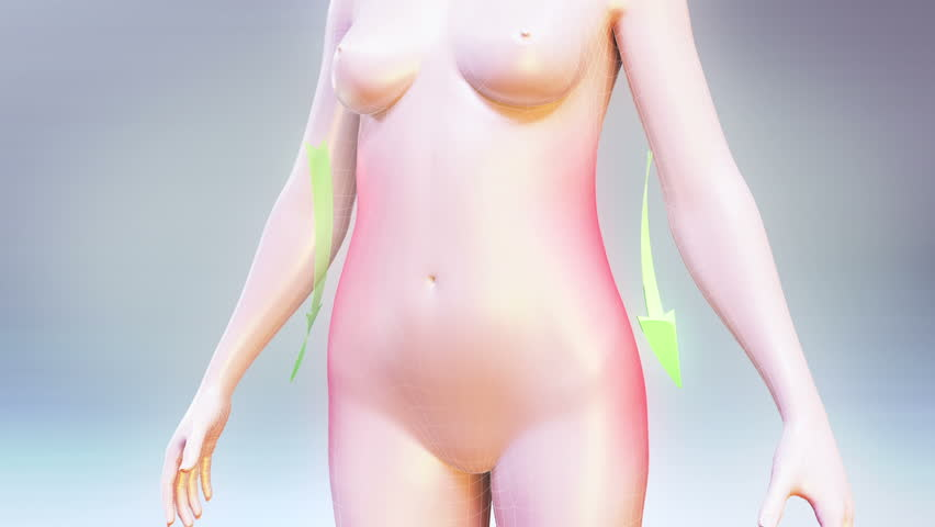Body Fit .Three high quality animation showing the process of weight loss and vanishing of body fat. Best for you commercial movie, video presentation and other production.
