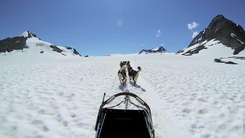POV Alaskan Husky dogs used for dog sled adventures, USA - POV Alaskan husky dog team traversing snow covered high mountain plateau, Alaska, USA